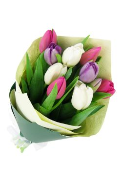 Mixed Pastel Tulip Bunch - Standard
