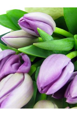 Purple Tulip Bunch - Standard