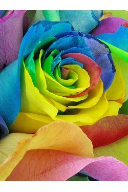 So Fancy - Rainbow Roses - Standard