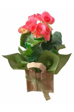 Bella Begonia Bag - Standard