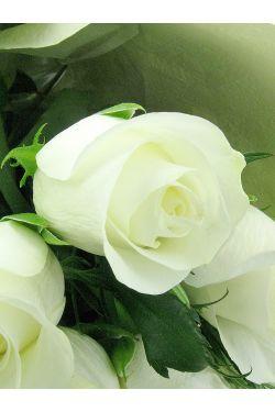 Valentine's 24 White Roses - Premium