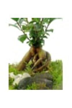 Faraway Tree - Standard