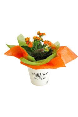 Fleur Orange Kanlanchoe