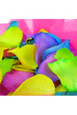 Rainbow Road Rose Petals - Standard