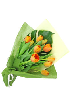 Tulip Bunch - Standard