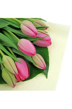 Pink Tulip Bunch - Standard