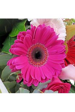 In Full Bloom - Standard