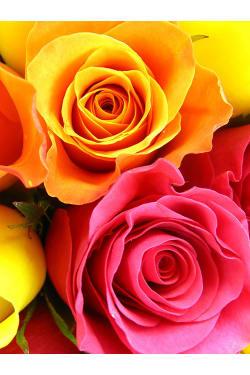 Just Roses - 6 Roses (Half Dozen)