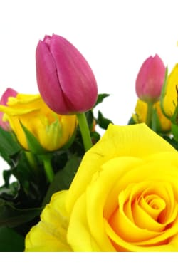 Roses and Tulips - Standard