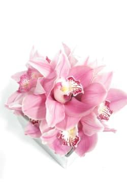 Cymbidium Orchid Vase - Standard