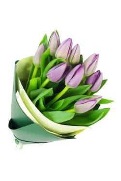 Mauve Tulip Bunch - Standard