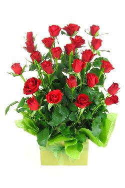 Presentation - 24 Roses (Two Dozen)