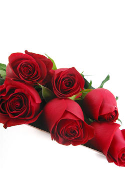 Valentine's 6 Elegant Roses - 6 Roses (Half Dozen)