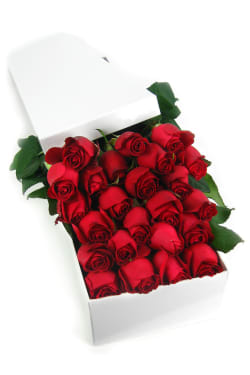 Valentine's 24 Elegant Roses - 24 Roses (Two Dozen)