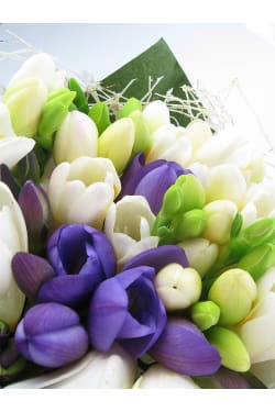 Freesia Bunch - Standard