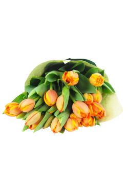 Tulip Bunch - Deluxe
