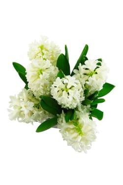 Hyacinth vase - Standard