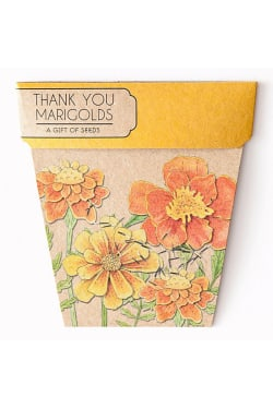 Marigold Seeds - Thank you - Standard