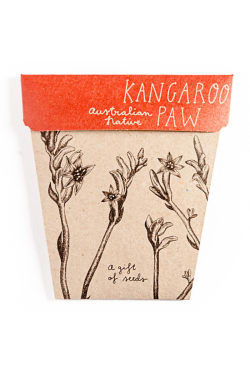 Kangaroo Paw Seeds - Standard