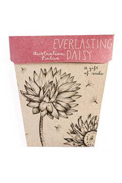 Everlasting Daisy Seeds - Standard