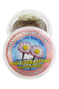Everlasting Daisy Seed Kit - Standard