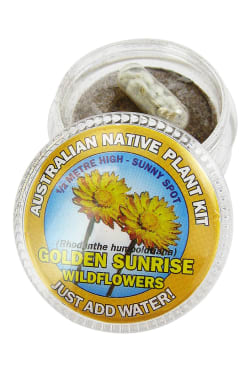 Golden Wildflowers Seed Kit - Standard