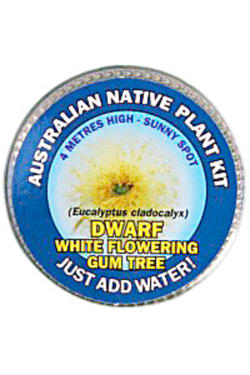 White Flowering Gum Seed Kit - Standard