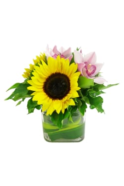 Sunflowers and Cymbidium vase - Standard