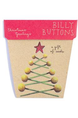 Christmas Billy Button Seeds - Standard
