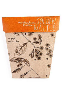Golden Wattle Seeds - Standard