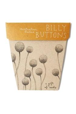 Billy Button Seeds - Standard