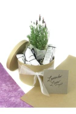 Lavender Lover - Standard