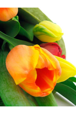 Bright Mixed Tulips - Deluxe