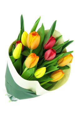 Bright Mixed Tulips - Standard