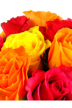 Mixed Bright Rose Bowl - Standard