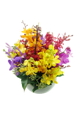 Orchid fishbowl - Deluxe