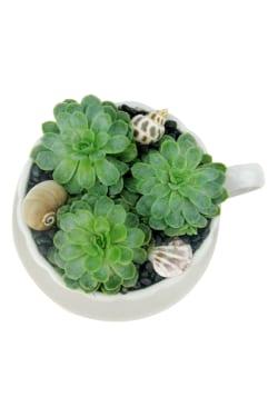 Succulent Tea Cup - Standard