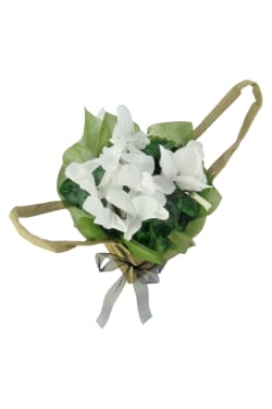White Cyclamen In Hessian Bag - Standard