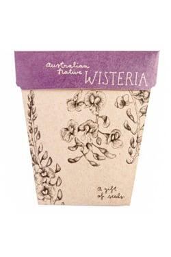 Wisteria Seeds - Standard