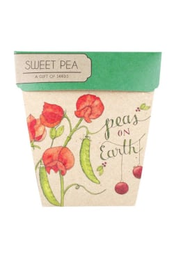 Sweet Pea Xmas Gift - Standard