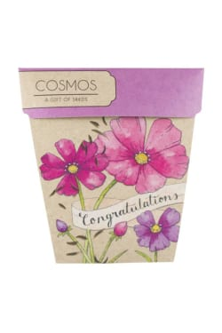 Congratulations Cosmos Seeds - Standard