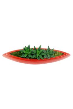 Triple the Fun Succulents  - Standard