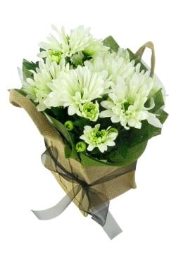 White Delicate Chrysanthemum - Standard