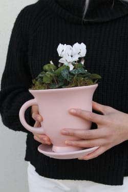 Little Cute-Tea Mini Cyclamen - Standard