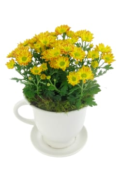 Orange Chrysanthemum Tea Cup - Standard