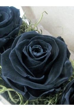Neverending Roses - Standard