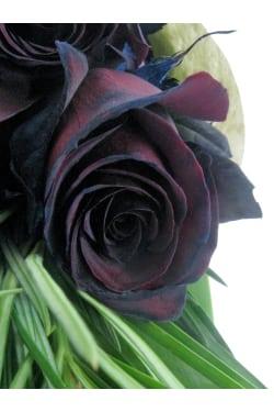 Nightfall Roses - Standard
