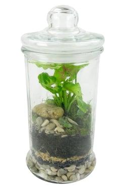 Terrarium - Tiny Tropic - Standard