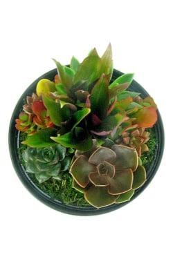 Modern Desert Succulent - Standard