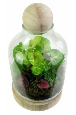 Tropical Forest Terrarium - Standard